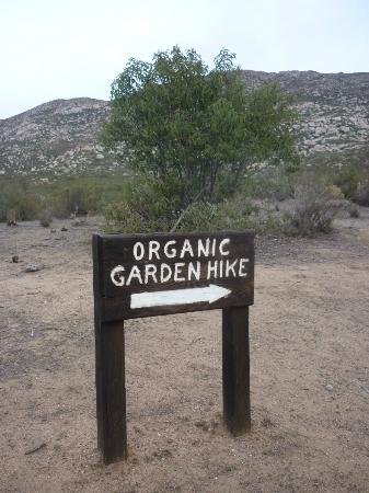 Rancho La Puerta Spa: Organic Breakfast Hike - hills of Tecate
