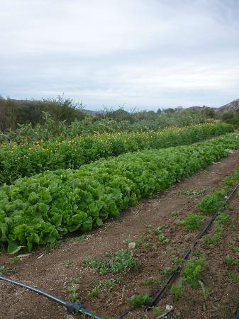 Rancho La Puerta Spa: The Organic Garden