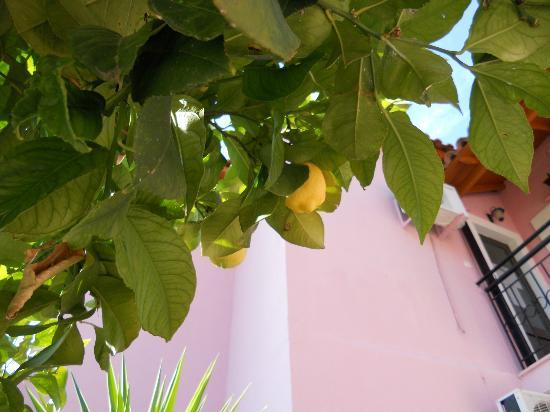 Oula Maisonettes: THE LEMON TREE