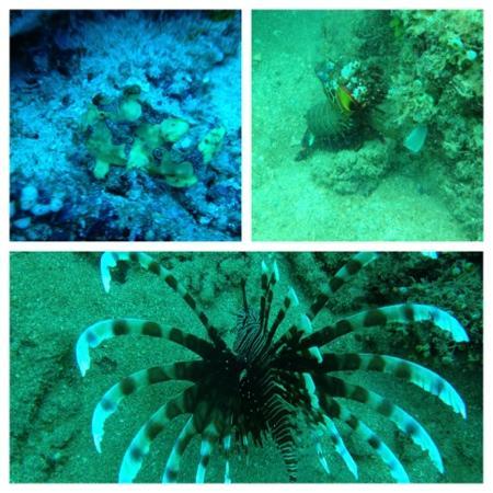Tasik Ria Resort Manado: marine life at bunaken national park