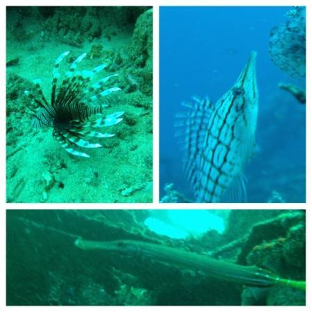 Tasik Ria Resort Manado: marine life at bunaken