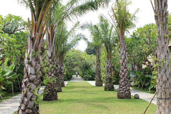 Pathway to Villas