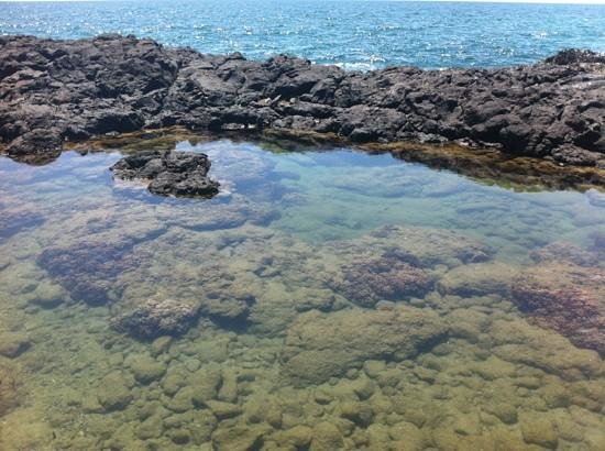 Bargara, Austrália: one of many rock pools with colourful fish