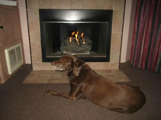 Hallmark Resort: My son's lab relaxing by fireplace.