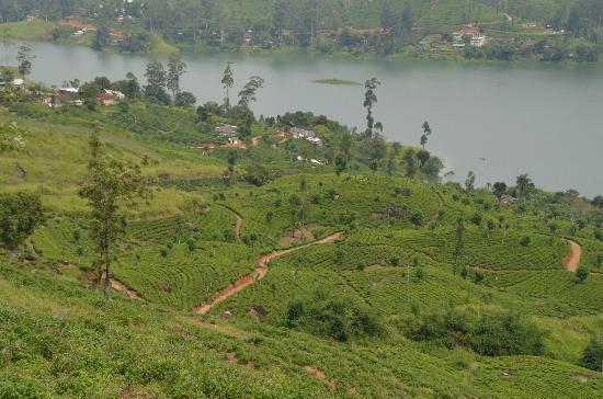 Ceylon Tea Trails: auf unserer Wanderung zum Norwood-Haus