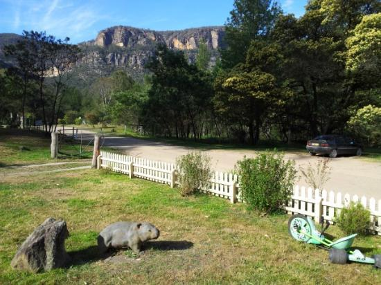 Comet Inn : Newnes - 1 hour up into Wolgan Valley