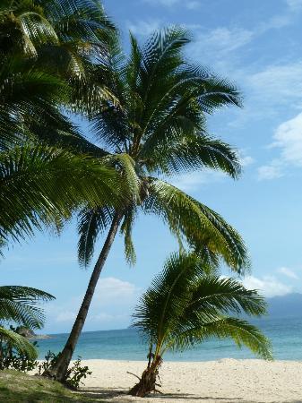 Sea Gypsy Village Resort & Dive Base: Der Strand, nur wenige Meter von den Hütten entfernt