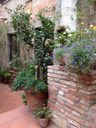 Albergo Duomo: the garden
