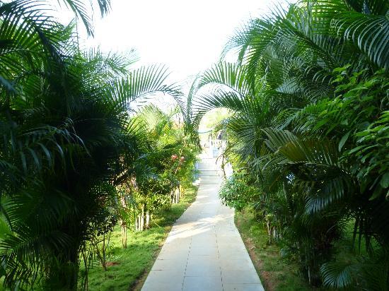 Mayflower Beach Resort: garden