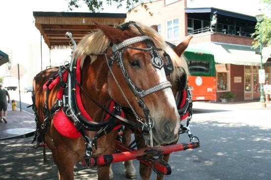 Plantation Carriage Tours In Savannah Ga