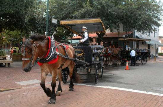 Carriage Tour Was Worth It Review Of Plantation Carriage Tours