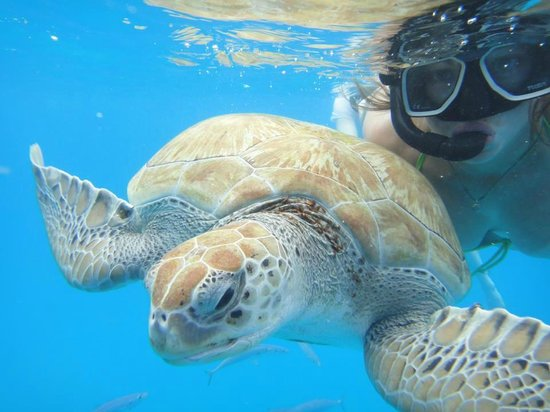 Silver Moon Cruises: Swimming with the turtles