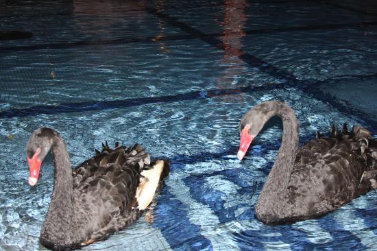 Pueblo Bonito Rose: Pond area between pool and hotel.