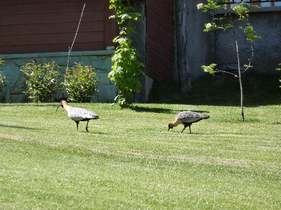 Charming - Luxury Lodge & Private Spa: Birds on the hotel lawn