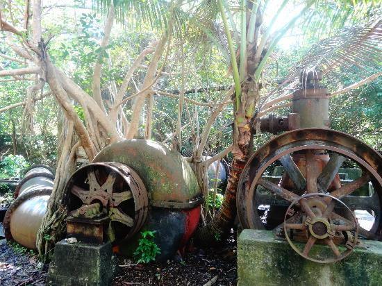 Humacao Nature Reserve: Old mill inside the reserve