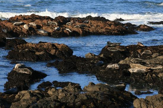 Castle Inn: Seals on the beach across the street