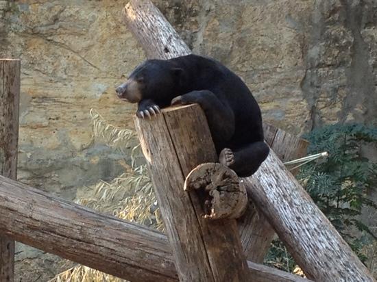 San Antonio Zoo : nap time