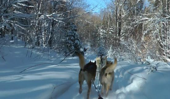 Algonquin Eco-Lodge: Dog Sledding