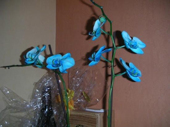 Hotel Brimer : Een van de vele orchidee's die in de lobby staan