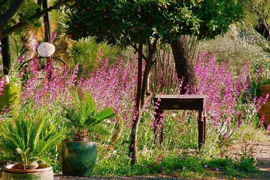 We love Springtime at Hacienda Linda!