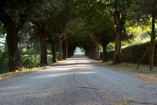 Villa di Piazzano: Entrance road