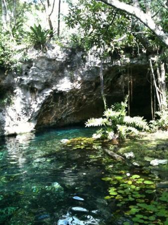 C 21 Tulum Fav - Picture of Grand Cenote, Tulum - TripAdvisor
