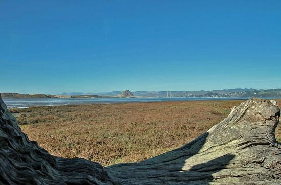 Baywood Inn Bed and Breakfast: Directly on the Morro Bay Estuary