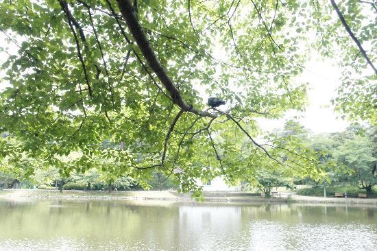 Saitama Prefecture Omiya Park: 大宮公園 池のほとり