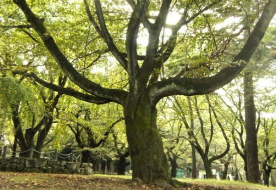 Saitama Prefecture Omiya Park: 大宮公園