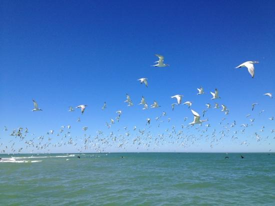 "Jensen's ""On the Gulf"": seagulls everywhere"