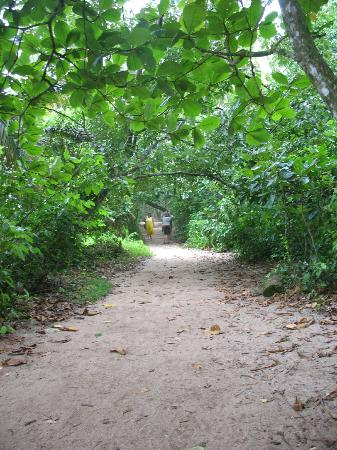Alby Lodge: Trail in Cahuita NP