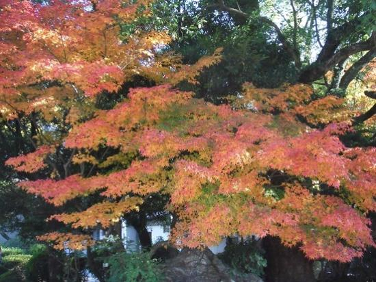 Nagoya, Japan: 見頃の紅葉