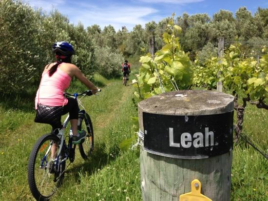 Explore Marlborough Wine Tours: bike tour