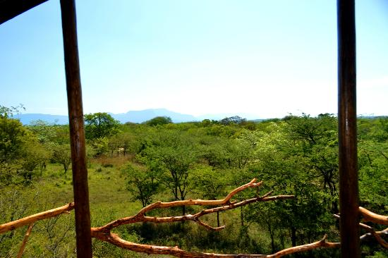 Pezulu Tree House Game Lodge: Aussicht hintere Terrasse