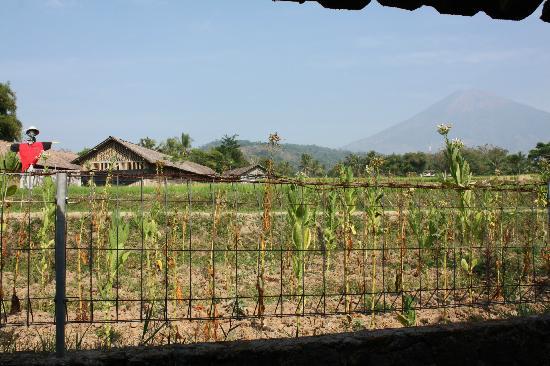 Villa Sumbing Indah: Vue de la chambre