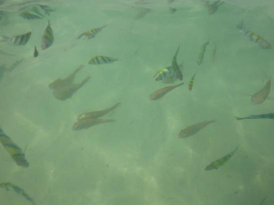 Laguna Tours: crystal clear water