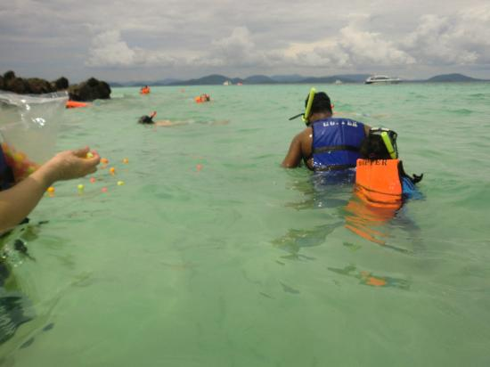 Laguna Tours: snorkelling