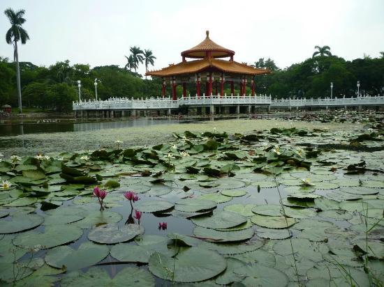 Tainan Park: 公園内の蓮池風景。