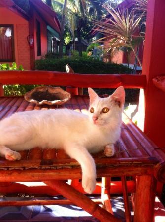 Lanta New Beach Bungalows: la cosa più bella il gattino