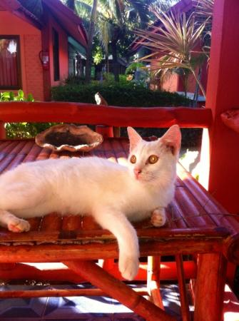 لانتا نيو بيتش بونجالوس: la cosa più bella il gattino