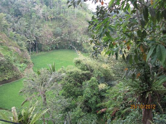 Villa Kalisha: View into valley / rice field from upstairs