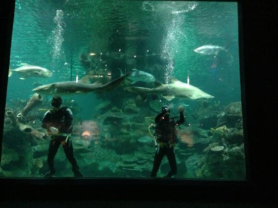 Large Tank With Sharks Picture Of Blue Planet Aquarium