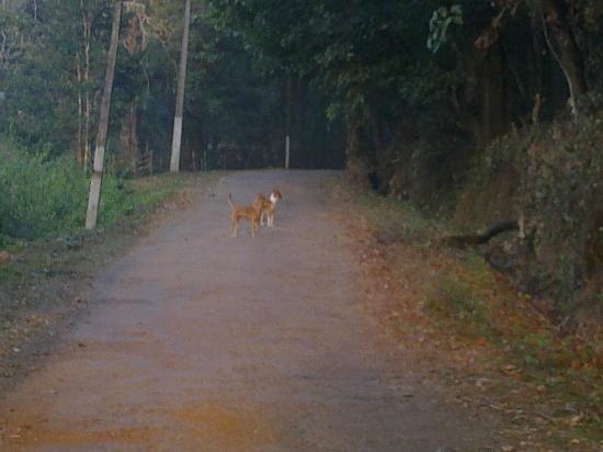 Amara Homestay, Dandeli: Road outside Amara