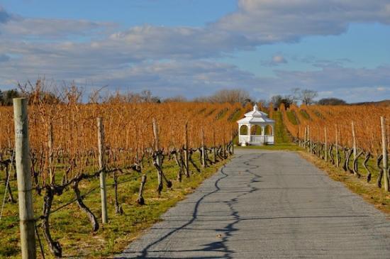 Pellegrini Vineyards: winery