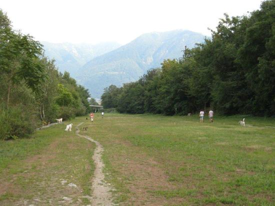 Albergo Losone: Dog walking area