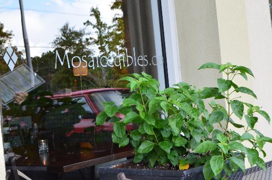 MOSAIC Restaurant Charleston: patio
