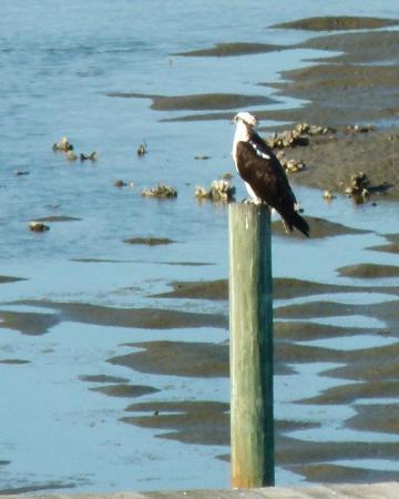 Natures Landing Condominium: Osprey