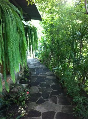 TOSA La Laguna: Pathway to rooms/nature trail