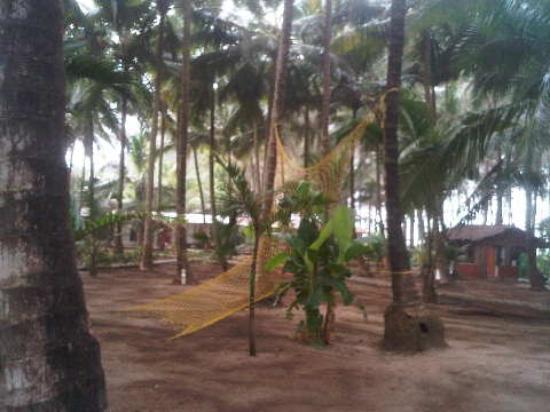 Alibaug, India: UNDER THE TREES