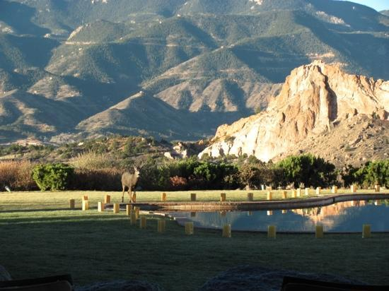 Garden of the Gods Club and Resort: mule deer by hotel reflecting pool with GOG in background.